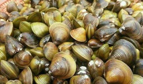 威海蚬蛤—鲜品