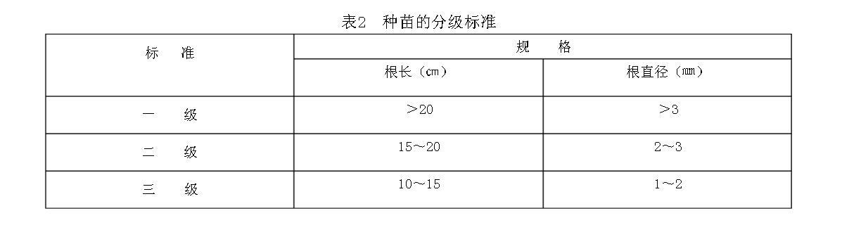 表2种苗的分级标准