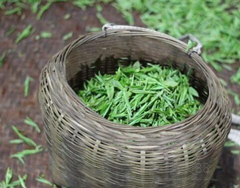 修水宁红茶—鲜品