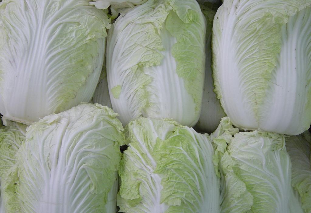 滏河贡白菜