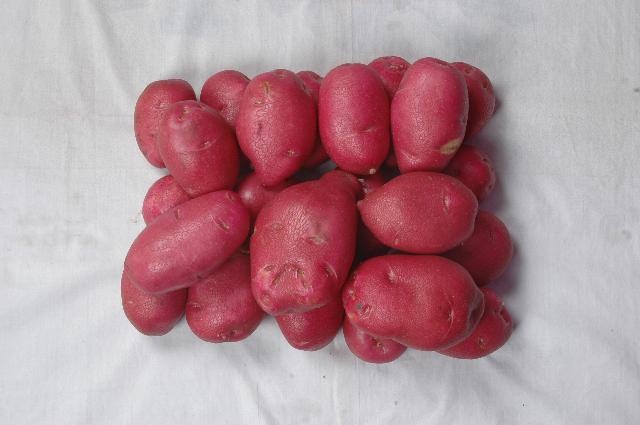 隆德马铃薯