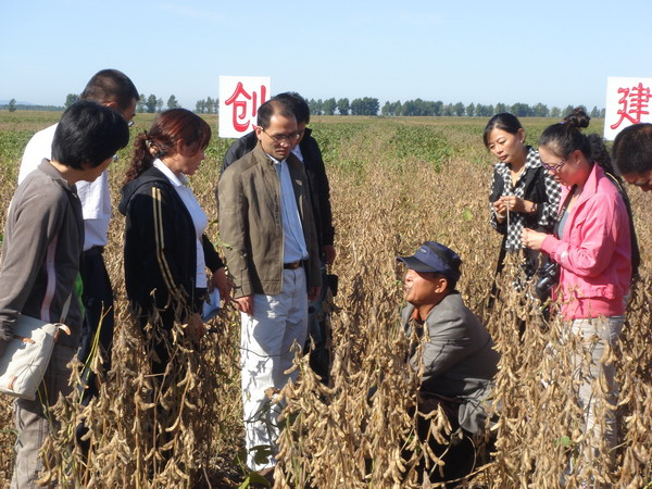 富锦大豆种植基地