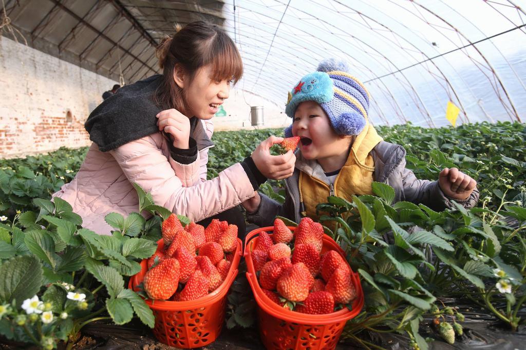 昌平草莓节