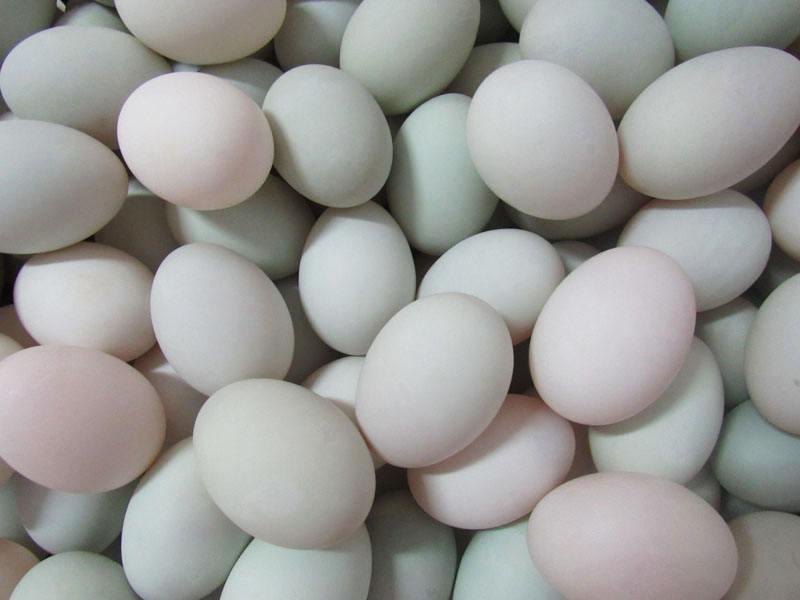 钦州海鸭蛋