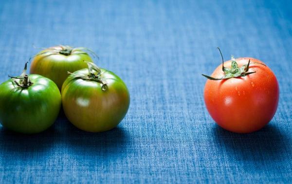 盘锦碱地柿子