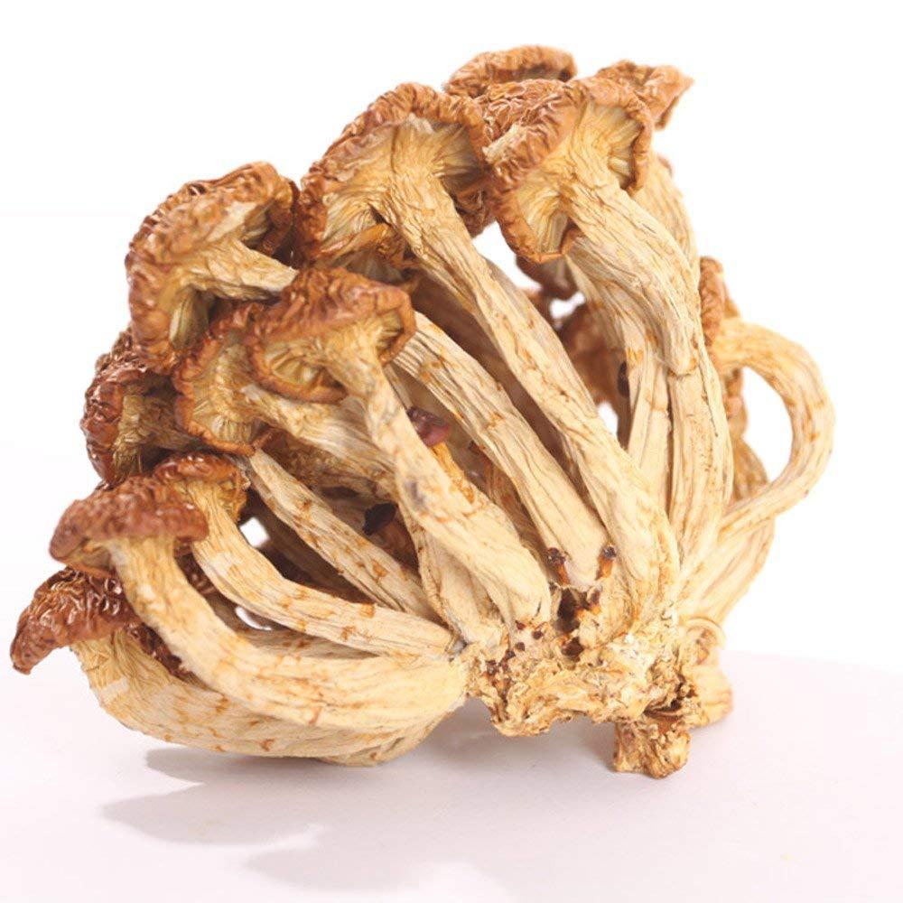 岫岩滑子蘑