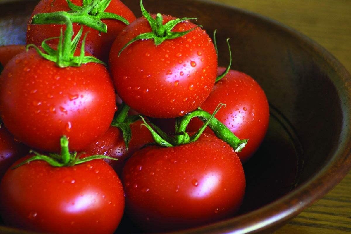 青铜峡番茄