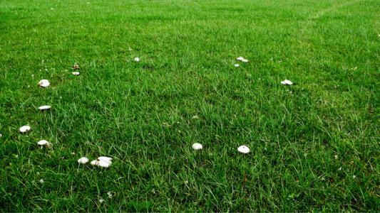 巴音布鲁克蘑菇