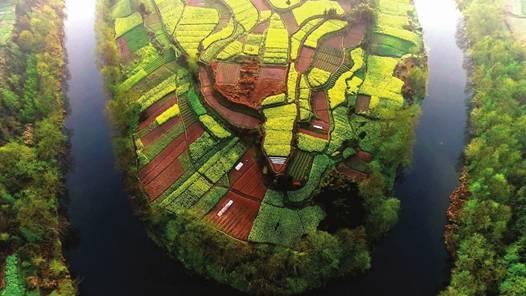 千佛竹根姜产地环境