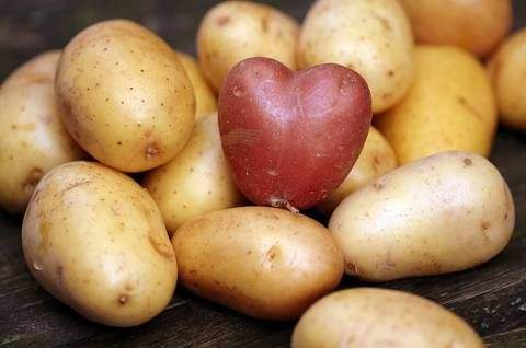 呼玛马铃薯