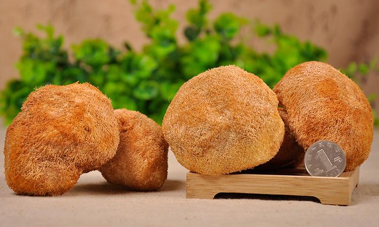 海林猴头菇