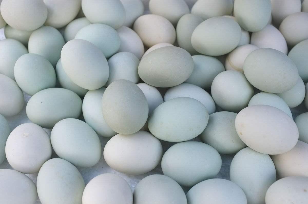 巨淀湖鸭蛋