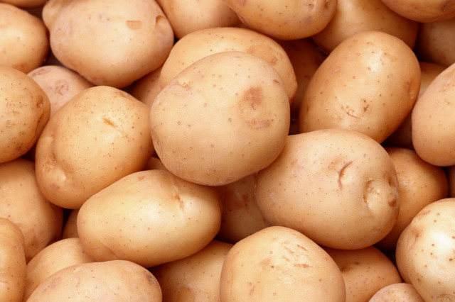 成熟的蒲县马铃薯