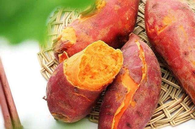 花园口红薯—蒸