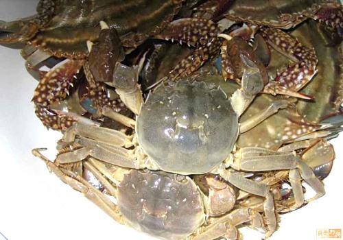 沙洋长湖河蟹鲜蟹
