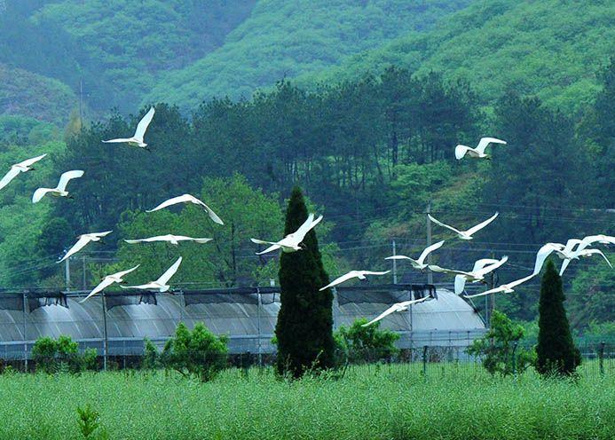 武义县环境