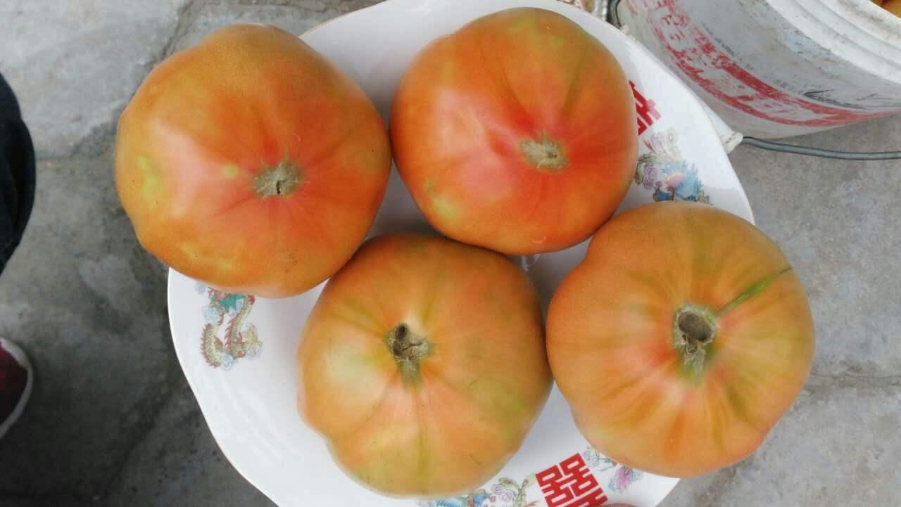 夏庄杠六九西红柿