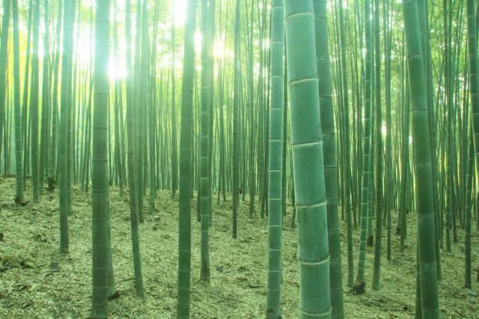 井冈山—竹林