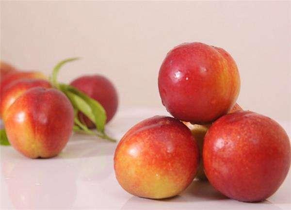 四井岗油桃