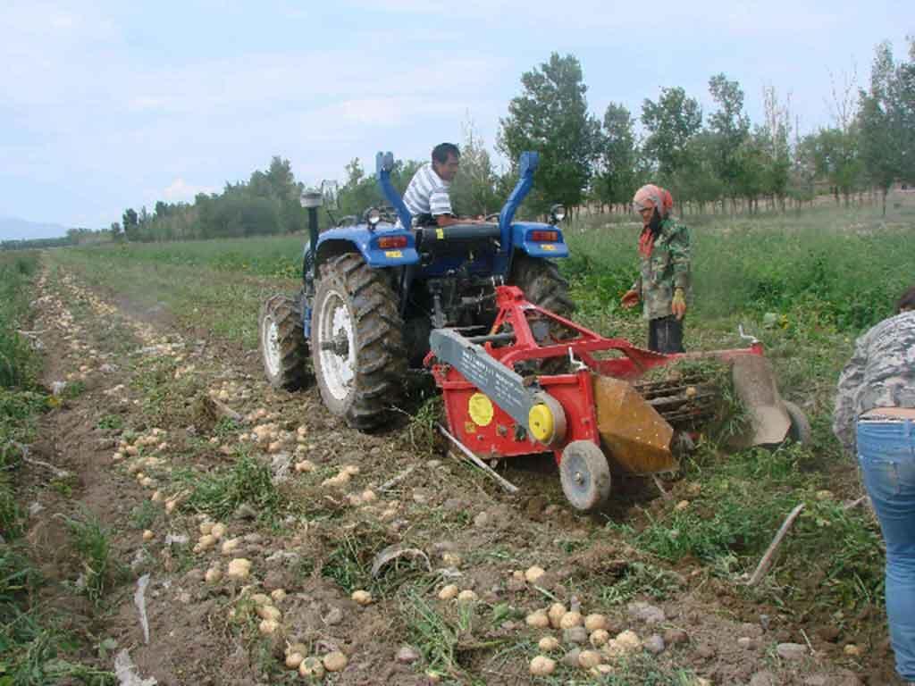西山农牧场马铃薯