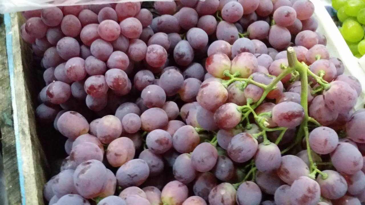 瓦房店葡萄