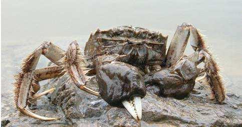 沙洋长湖河蟹