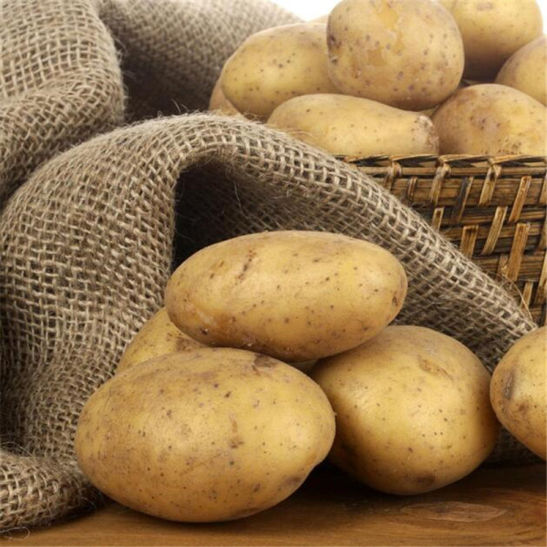曾家山马铃薯