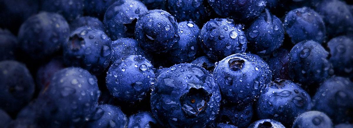 鄂伦春蓝莓