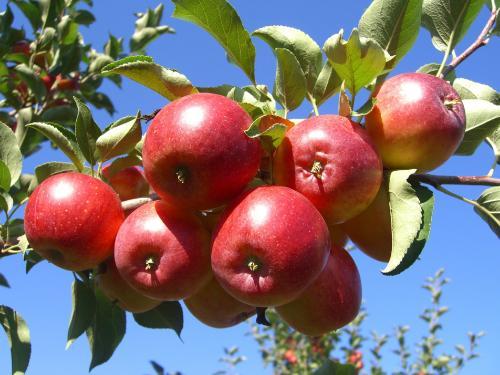 凉城123苹果