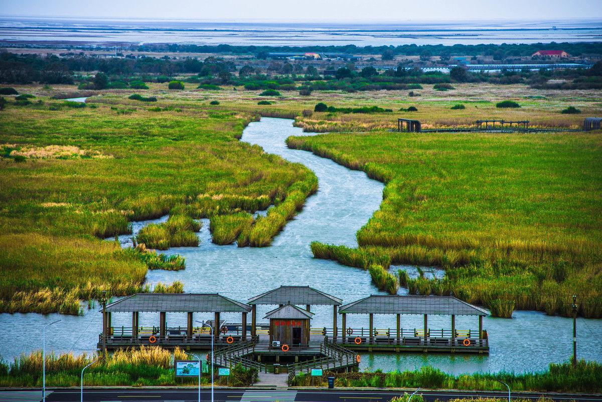 东营黄河口