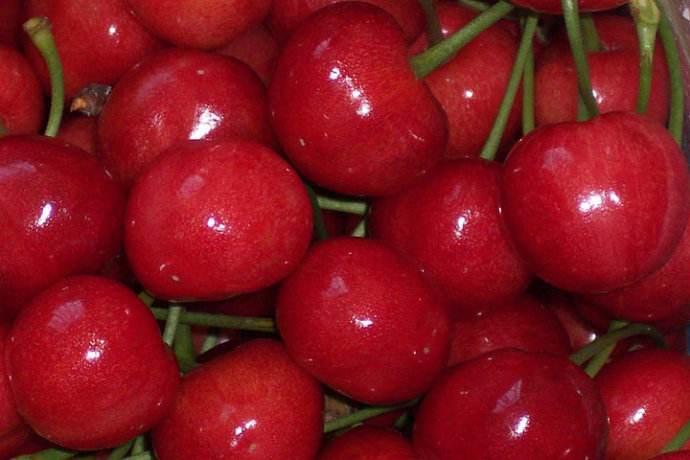 福山大樱桃