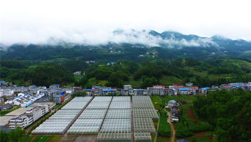 巫溪县马铃薯原种生产温室大棚