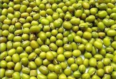 阳原鹦哥绿豆