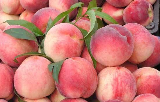 老堡子鲜桃
