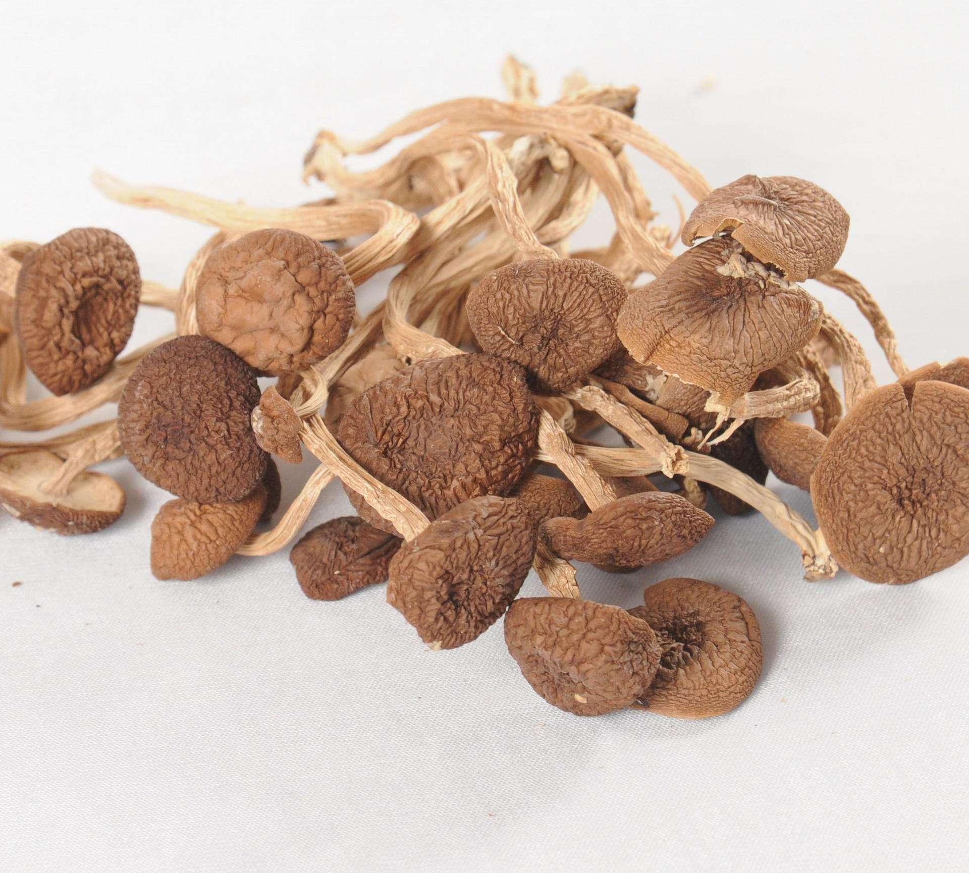 黎川茶树菇