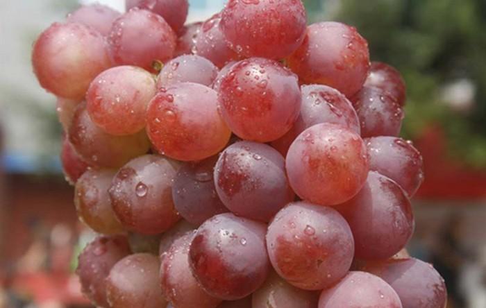 弥勒东风葡萄精品—红提