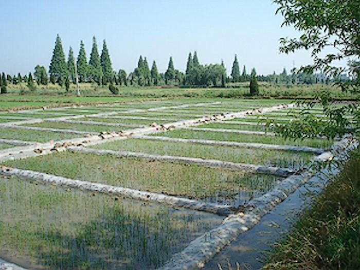 南陵大米国家现代农业示范区