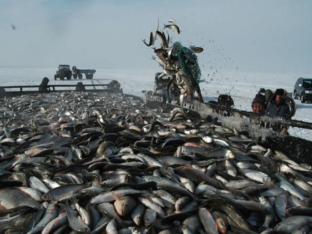 达里湖鲫鱼